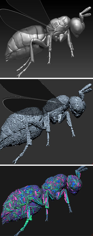 The initial steps of covering the Nasonia wasp in a 3D microbiome landscape using ZBrush.