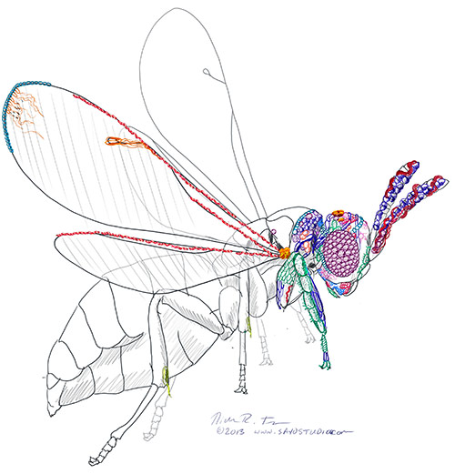 My initial sketch of the Nasonia wasp partially covered in the 3D microbiome landscape.