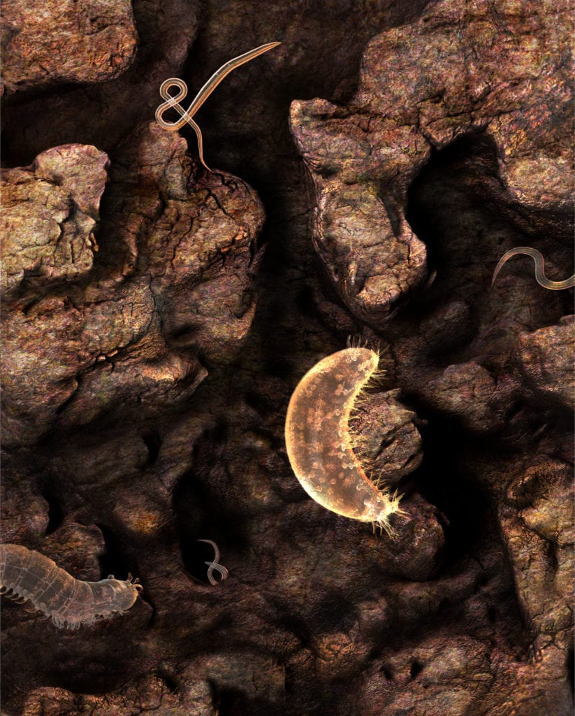 Microbial Extremophiles on Mars science illustration based on scientific research by Nicolle R. Fuller, SayoStudio