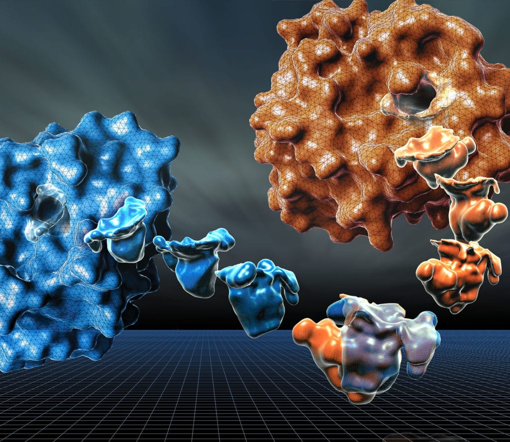 Computer Modeling of Proteins, Biochemists study the pockets in our body's enzymes (proteins) where molecules bind to carry out important functions—like signaling and energy production. Studying an enzyme's binding pocket is a key method to drug design, to design drugs which can either block a signal, or enhance it. Computational methods can compare similar proteins across many species to speed the drug design process, and to determine the amino acids that are important both functionally and evolutionarily.