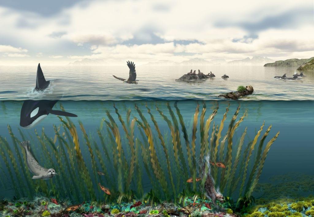 Sea Otters & Kelp Ecosystem