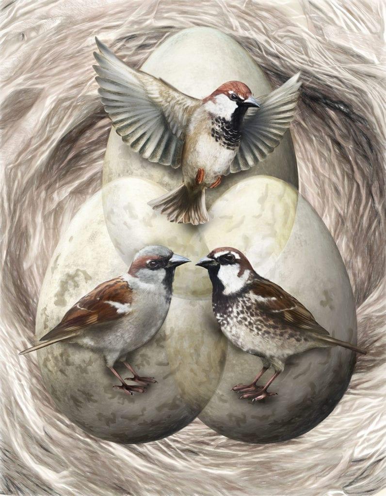 Sparrow Speciation