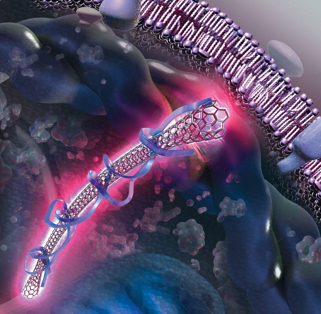 Nanotube wrapped in RNA shown inside a cell.