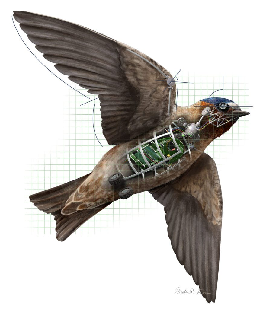 The melding of the biologist's and engineer's expertise is leading to next generation unmanned flying robots. By studying the flying finesse of swallows, scientists are learning how to create helpful drones that are able to maneuver in potentially dangerous spaces for missions like forest fire reconnaissance or search and rescue amid buildings of disaster areas.