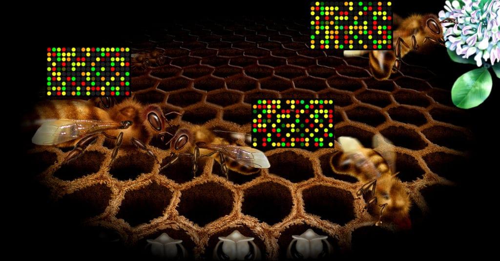 Bee Social Roles Genetics
