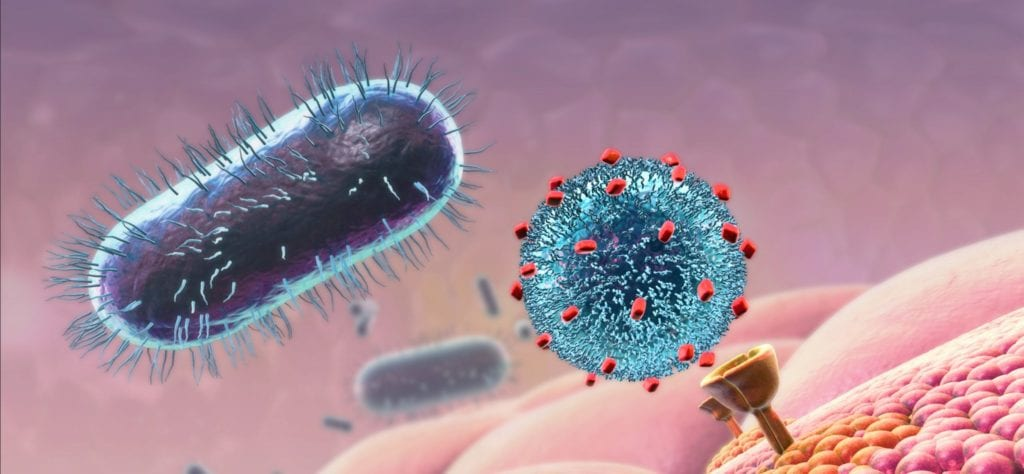 Combating Bacterial Disease Animation Still