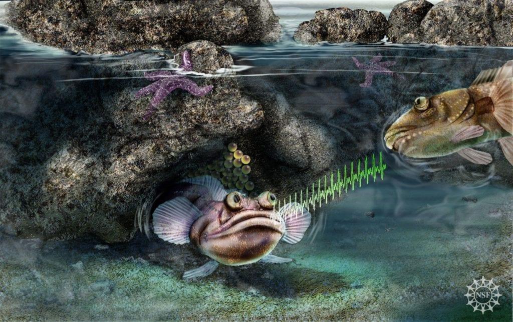 Origin of Vertebrate Sound