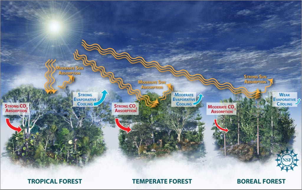 Science infographic showing forests' impact on climate change and carbon dioxide, by Nicolle R. Fuller, SayoStudio