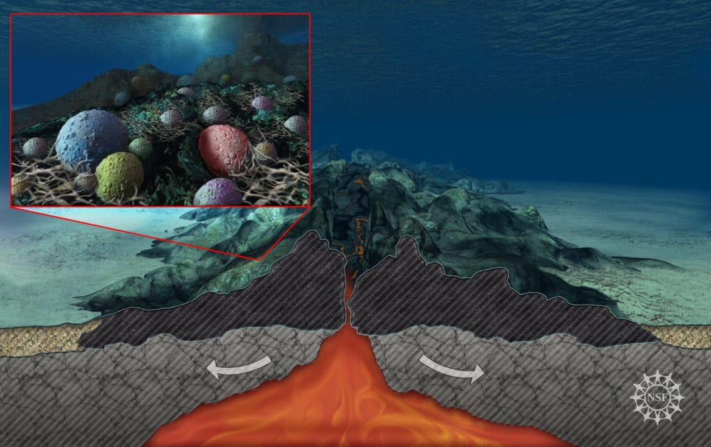 Rock Eating Ocean Microbes