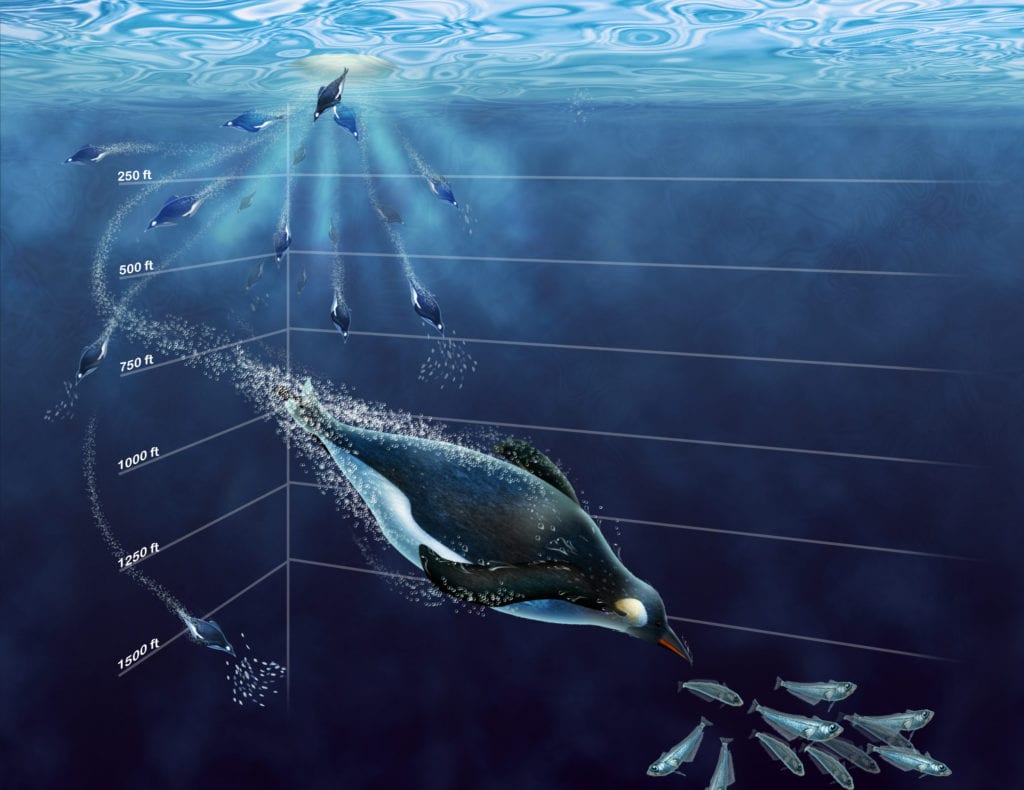 Penguin Diving Depth