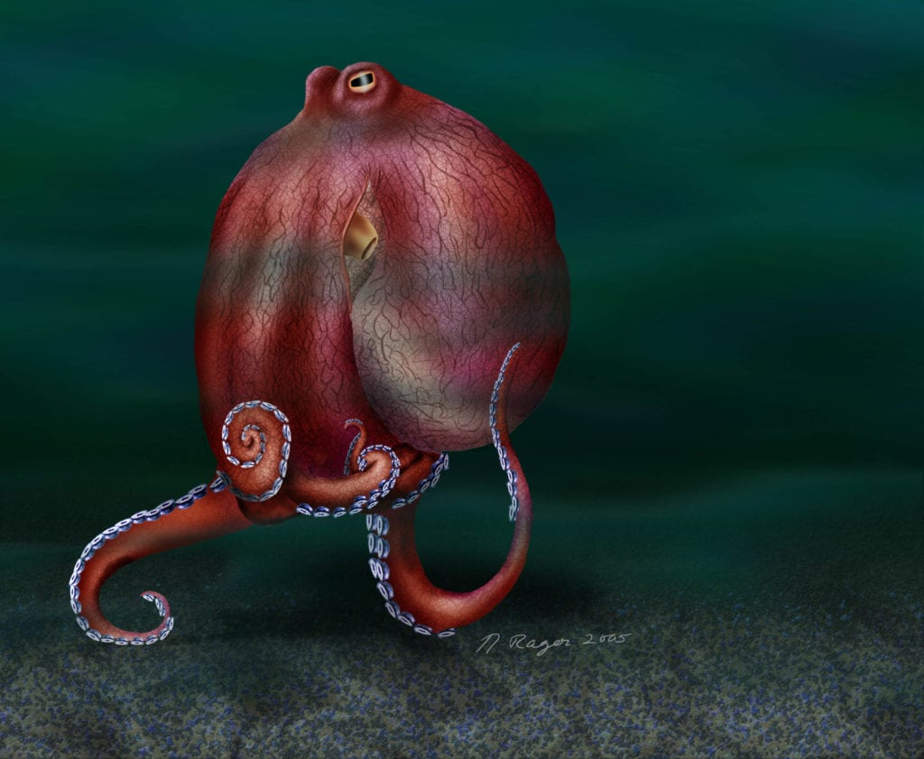 Walking coconut octopus science art drawn by Nicolle R. Fuller