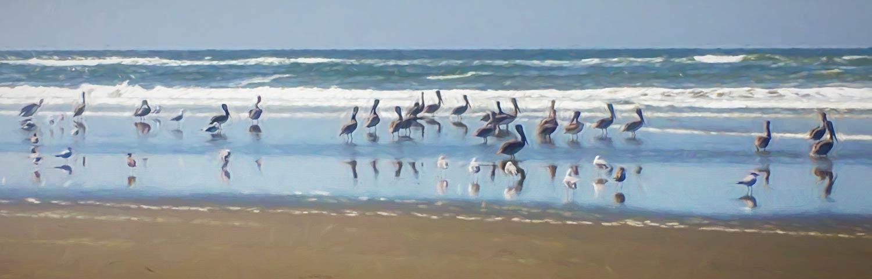 pelicans beach painting N.R.Fuller