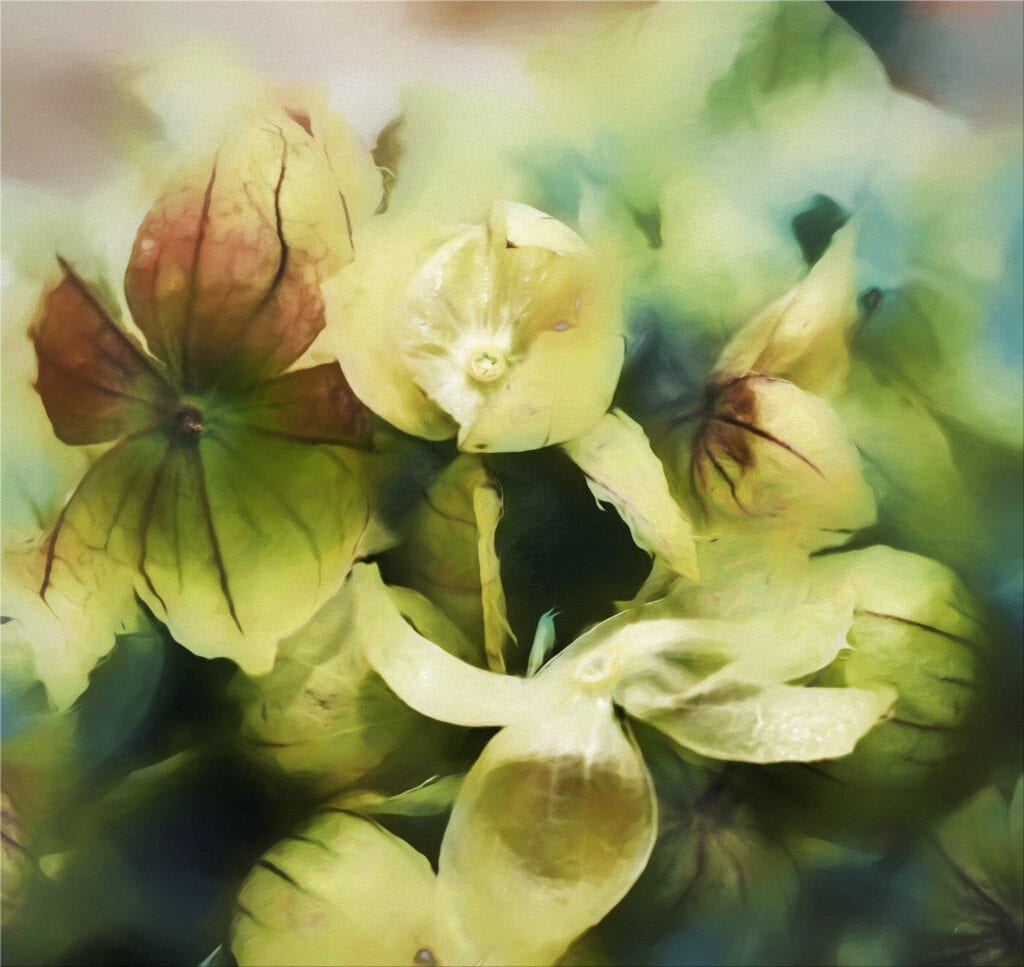 Tomatillo Painting by Nicolle R Fuller