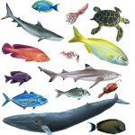 Marine Life drawn by Nicolle R. Fuller, SayoStudio