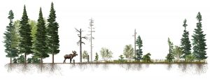 Moose ecological impacts on trees, shrubs, and root mass in an illustrated scientific figure, by SayoStudio