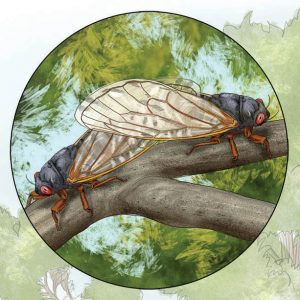 Cicadas Life Cycle Illustration, Cicadas in love.