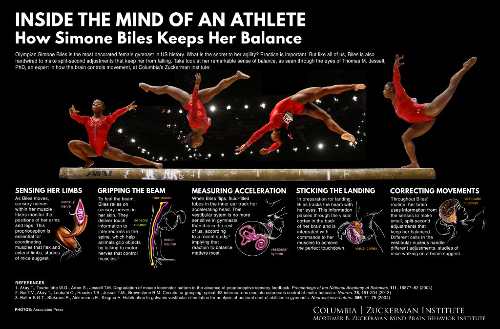 athlete gymnast neuroscience illutsration infographic