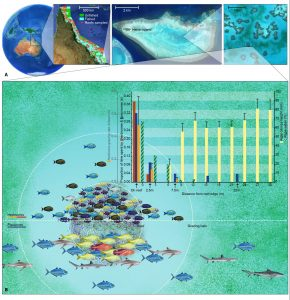 fish ecology and coral reef impact illustrated figure of fishing impacts in the Great Barrier Reef, by SayoStudio