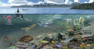 Norwegian Sea Food web illustrated ocean landsacpe with lobsters, fish, orcas by Nicolle R. Fuller
